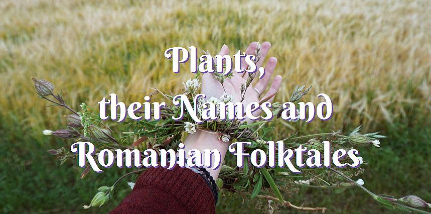 plants romanian folklore