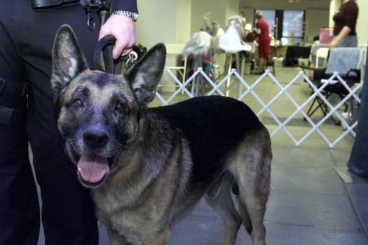 Apollo, the brave Silent Hero K-9 Dog of 9/11 New York (1992 - 2006)