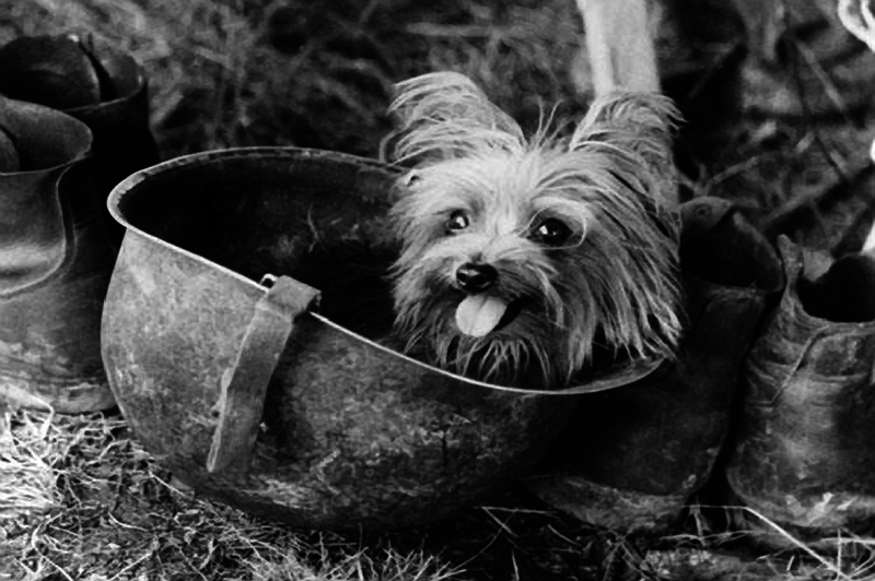 10 Dogs Who Made and Changed History, WWII Smoky