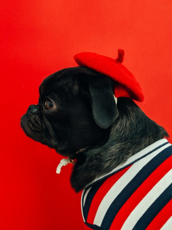 a cute black dog wearing a red beanie