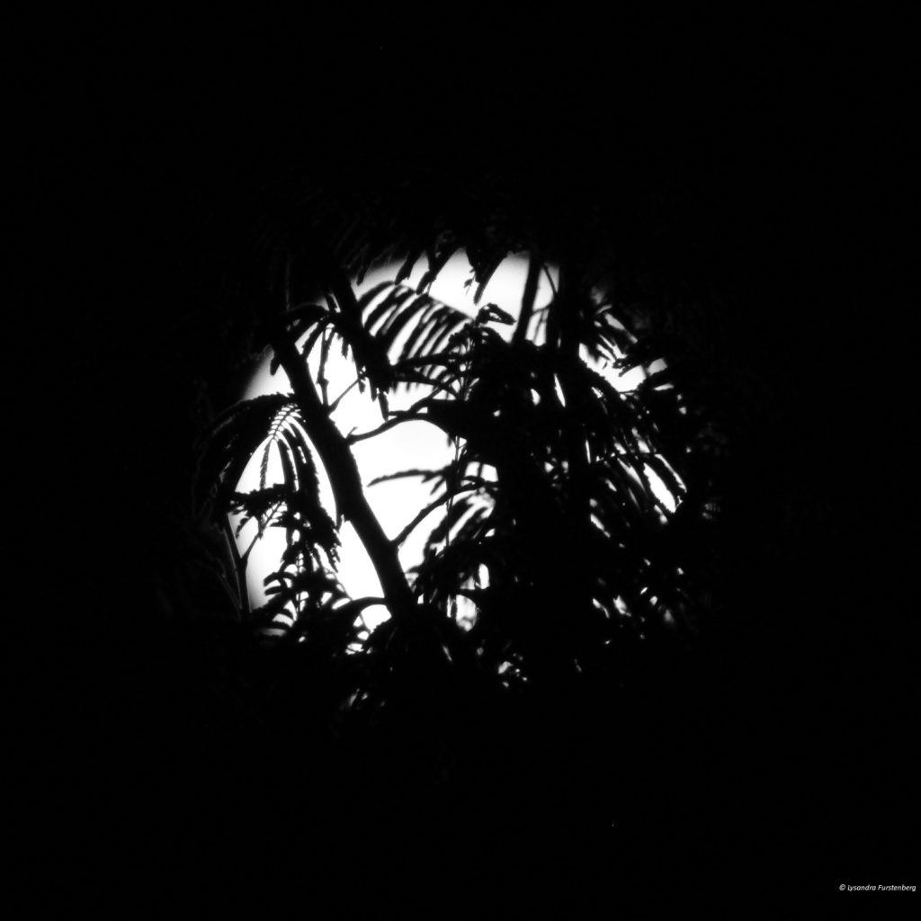 Black and White, Square Moon Trees
