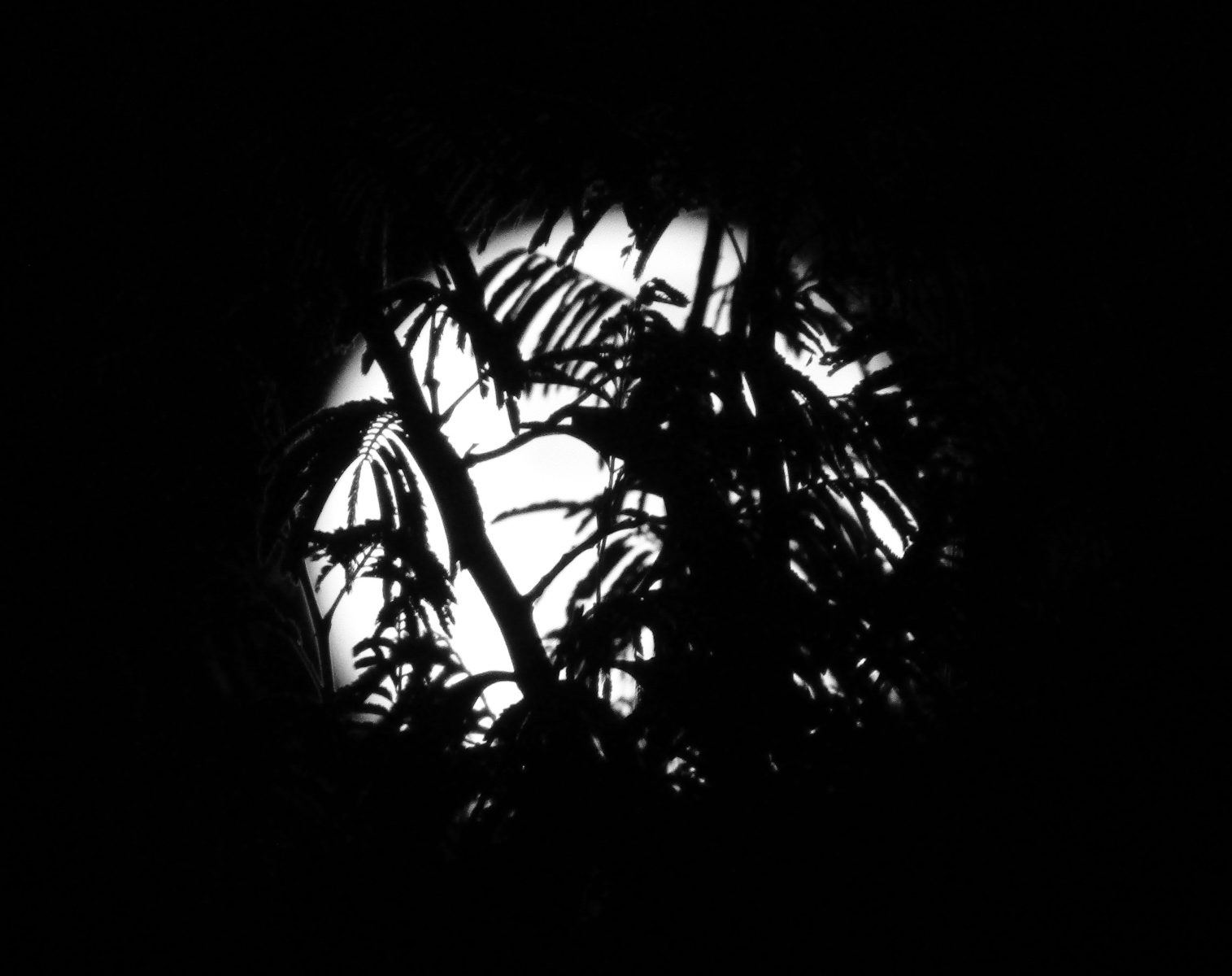 black and white square moon photo