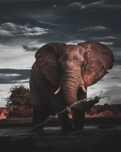 Die Reusagtige Olifant, The Giant Elephant and the Rain. A bull elephant against stormy clouds. Photo by Geran de Klerk, Unsplash