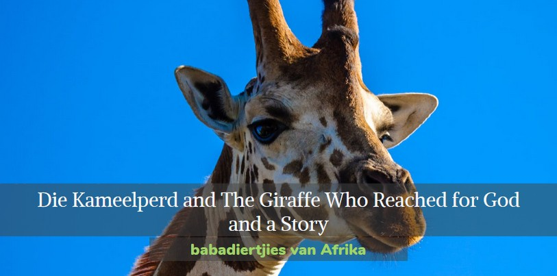 Die Kameelperd . The Giraffe Who Reached for God OR Why Giraffes Have such Long Necks