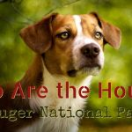 who are the hounds of Kruger National Park