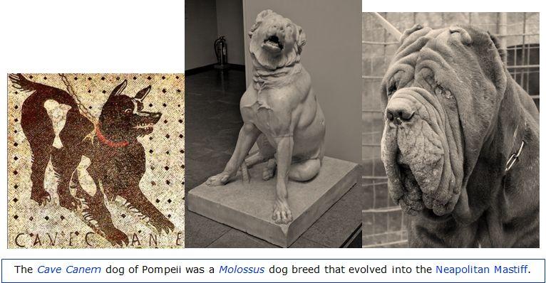 Cave Canem Molossus Neapolitan Mastiff dog evolution