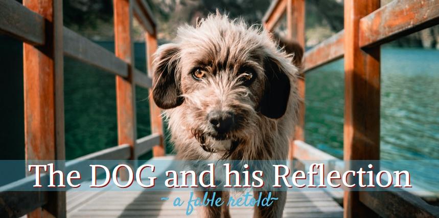 dog reflection bone story